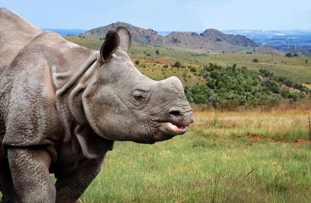 India One of The Best Places for Rhinos